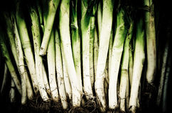 Earthy Leeks Royalty Free Stock Photography