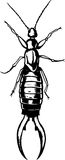 Earwig Royalty Free Stock Photos