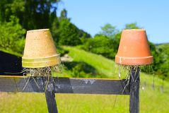 Earwig pots Royalty Free Stock Photos