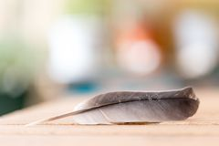 Easiness: Feather on a wooden desk, copy space. Feather is lying on a wooden desk, outside with copy space easiness ease airiness lightness weight lightly stock photography
