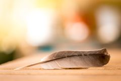 Easiness: Feather on a wooden desk, copy space. Feather is lying on a wooden desk, outside with copy space easiness ease airiness lightness weight lightly stock photos