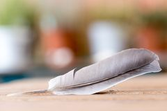 Easiness: Feather on a wooden desk, copy space. Feather is lying on a wooden desk, outside with copy space easiness ease airiness lightness weight lightly stock images