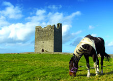 Easky Castle Co. Sligo Ireland. Easky castle with a horse co. sligo ireland on a beautiful sunny day Stock Images
