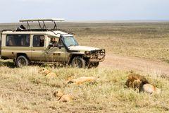 Free East African Lion Family And Safari Car Royalty Free Stock Photo - 109039085