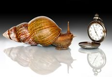 East African snail and clock. Photo East African snails and hours Stock Photography