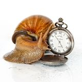 East African snail and clock Royalty Free Stock Images