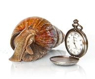 East African snail and clock. Photo East African snails and hours Stock Photo
