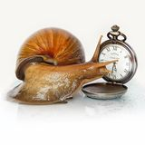 East African snail and clock royalty free stock photography