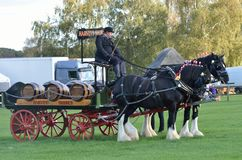 East Anglia Equestrian Fair pair of heavy horses and cart Royalty Free Stock Images