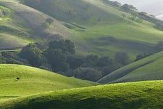 East bay farm land. East bay, San francisco area, Diablo range, California royalty free stock image