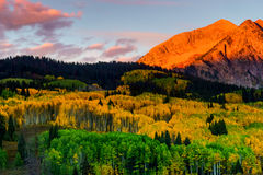 East Beckwith Alpenglow. East Beckwith Mountain is painted in sunrise alpenglow as the colorful Aspen of Kebler Pass show off their brilliant color Stock Photography