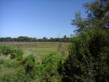 Swampy landscape of the ecological reserve in the city of buenos aires royalty free stock image