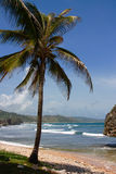 East coast of Barbados.  Royalty Free Stock Images