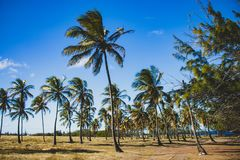 East Coast of Barbados royalty free stock image