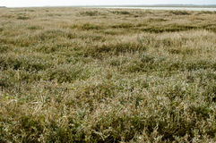 East coast salt marsh Stock Image