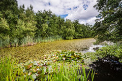 East Cramlington Nature Reserve Royalty Free Stock Photography
