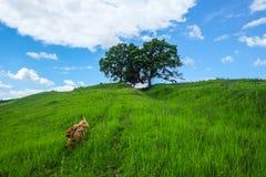 East European scenery - Transylvania region Stock Images