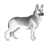 The East European shepherd. Image of a big thoroughbred dog. Watercolor painting Stock Photos