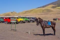 EAST JAVA, INDONÉSIA 21 DE NOVEMBRO: Os jipes coloridos e um cavalo no savana de Blok no nascer do sol iluminam-se no parque naci Fotos de Stock Royalty Free