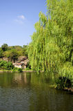 East Lake Shaoxing China Scenic Area. A weeping willow tree hanging over Hu or East Lake scenic area in Shaoxing China in Zhejiang province stock photography