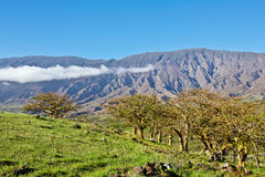East Maui Trees Royalty Free Stock Image