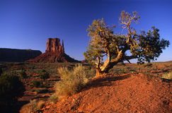 East Mitten Butte of Monument Valley Royalty Free Stock Images
