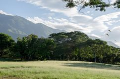 Meadow in a important park of Caracas royalty free stock photos