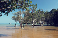 East Railay Bay in Thailand Royalty Free Stock Photography