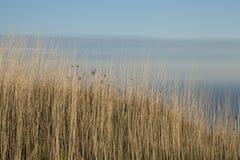 East Sussex, Angleterre du sud, l'Europe - pailles sèches photographie stock libre de droits