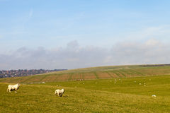East Sussex landscape. Stock Images