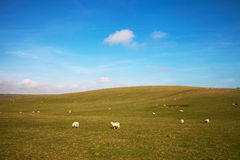 East Sussex landscape. Royalty Free Stock Photo