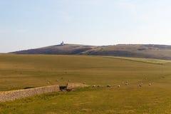 East Sussex landscape. Sheeps in East Sussex landscape, England Stock Photos