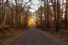 East Texas Backroad in the Fall. An East Texas back road winding through the trees during the fall royalty free stock image