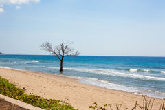 East Timor coastline Royalty Free Stock Images
