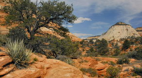 East Zion Morning Royalty Free Stock Photography