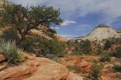 East Zion, Zion National Park. Image of the lovely high desert landscape on a gorgeous early spring afternoon in the eastern end of Zion National Park in Utah Stock Images