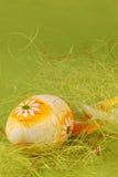 easter äggblomma Arkivfoton