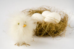 Easter. White easter eggs and easter chicken decoration in birds nest Royalty Free Stock Image