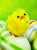 easter Fotografia Royalty Free
