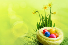 Easter. Colorful painted easter eggs in nest Royalty Free Stock Photo
