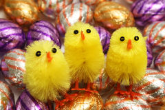 Easter. Chickens on Chocolate Easter Eggs stock images