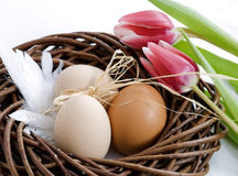 Easter. Detail with  eggs or spring motive Stock Images