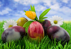 Easter. Eggs and flowers on grass stock photography