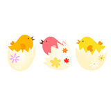 Easter. Background with chicks in shell Stock Photo