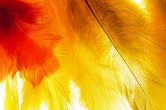 Easter abstract. Yellow and orange easter feathers on white background royalty free stock photos