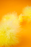 Easter abstract Stock Image