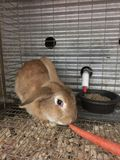 Rabbit for sale at well known Midwestern feed store stock images