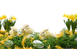 Easter arrangement. Easter decoration with rabbits, eggs and narcissus flowers stock photos