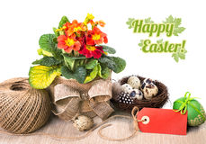 Easter arrangement with orange primrose on whte, text space Stock Photography