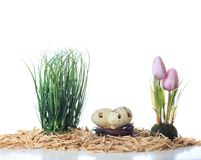 Easter arrangement tulips eggs nest grass on white background royalty free stock photos